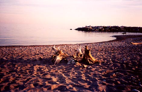 Driftwood on the beach at sunset