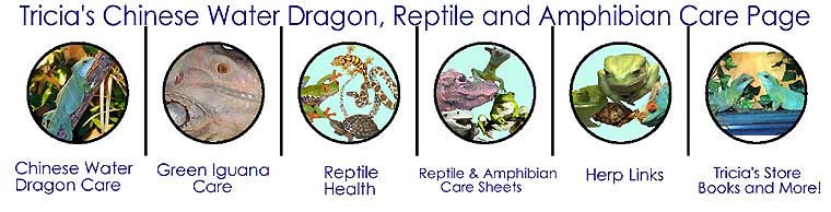 Tricia's Chinese Water Dragon, Reptile and amphibian care page